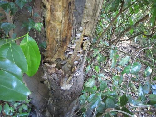 キノコが生えた朽ち木
