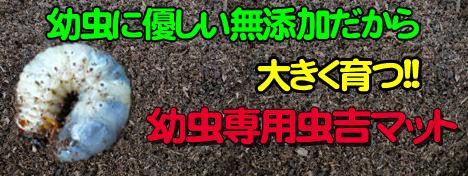 九州産の無添加幼虫マット販売