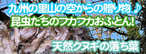 クワガタ、カブトムシの隠れ家の九州産クヌギの落ち葉