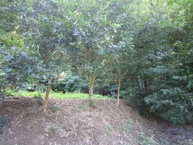 2013年9月16日のクワガタカブトムシの森作り