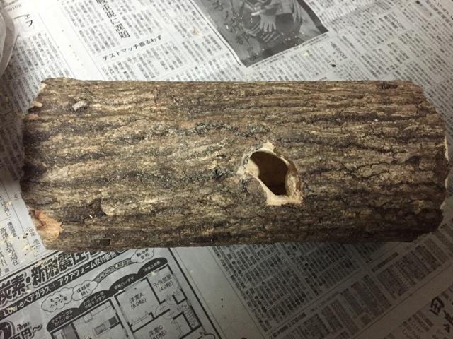 ジャンボ止まり木の樹洞作り