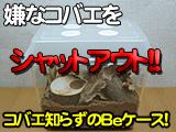 クワガタ、カブトムシ飼育用コバエ防止のBeケース販売