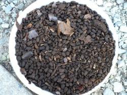 カブトムシ幼虫の糞