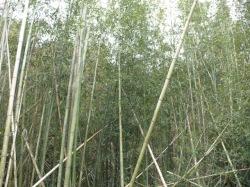 竹林です。