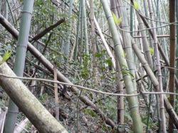 竹林の中です。