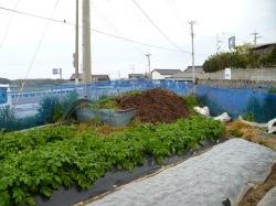 畑の脇の有機堆肥