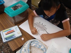 女の子も夢中でカブトムシのお絵描き
