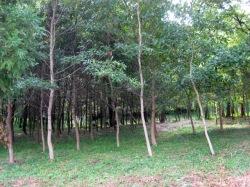 2011年7月31日のカブトムシの森の様子