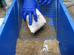 菌床ブロックを金網で擦りおろします