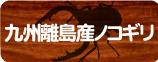 九州離島産ノコギリクワガタ販売コーナー