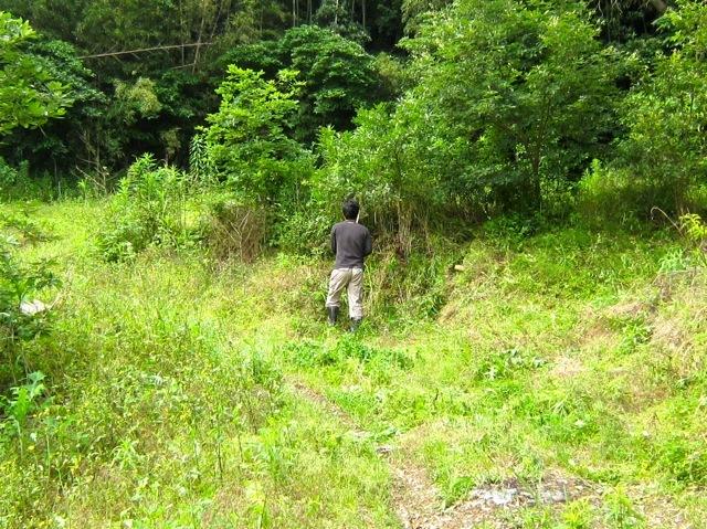 2011年7月のクワガタ、カブトムシの森