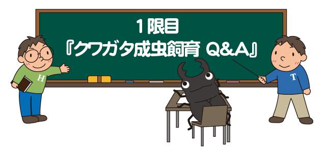 クワガタ成虫飼育の質問のイラスト1