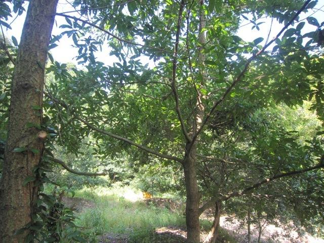 2015年8月2日の虫吉の森の様子