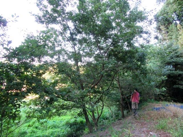 2016年8月10日時点の虫吉の森の様子