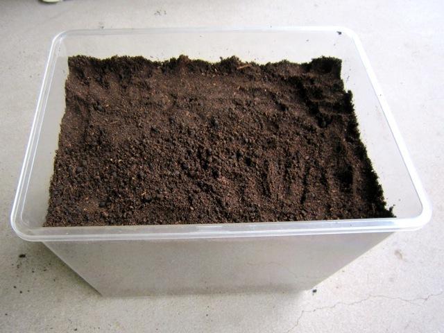 ミヤマクワガタの産床の完成です。