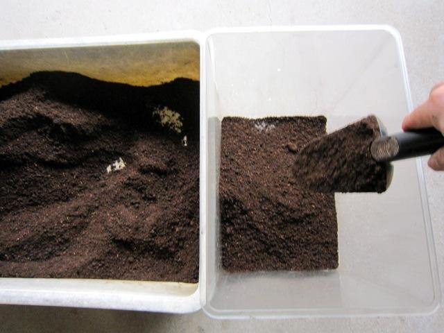 ミヤマクワガタ用の特製昆虫マットをBeケース(大)に入れます