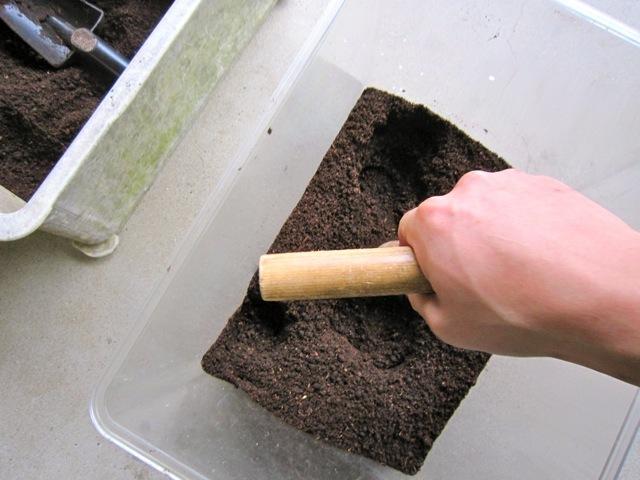 底の部分を固めるのがミヤマクワガタの産卵のコツです