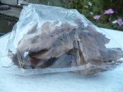 クワガタ飼育用クヌギの落ち葉