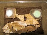 昆虫ゼリーのブログ記事