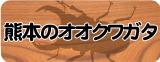 オオクワガタ販売(熊本県産)