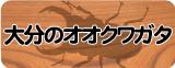 オオクワガタ販売(大分県産)