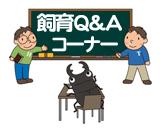 クワガタ飼育の質問