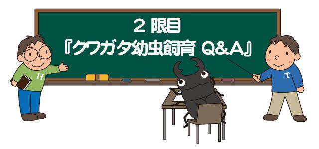 クワガタの幼虫飼育の質問と回答